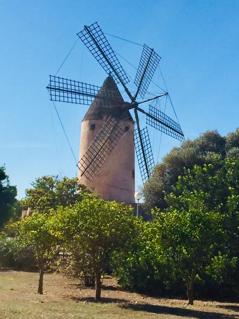 Kleiner Ausflug zur Mühle von Santa Ponsa - die Mühle.