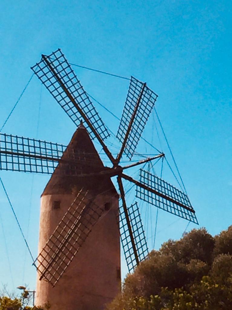 Kleiner Ausflug zur Mühle von Santa Ponsa 2