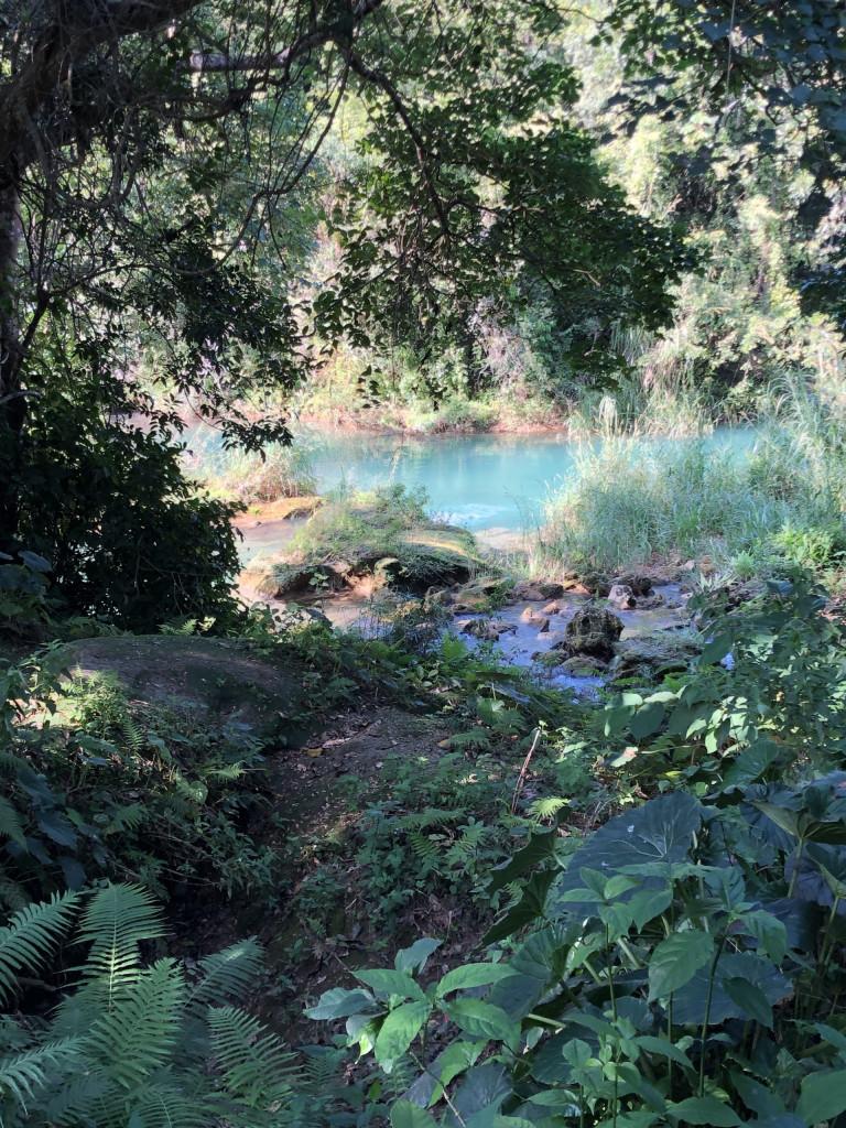 Unsere Kuba-Rundreise: Cienfuegos und El Nicho - üppige Vegetation El Nicho
