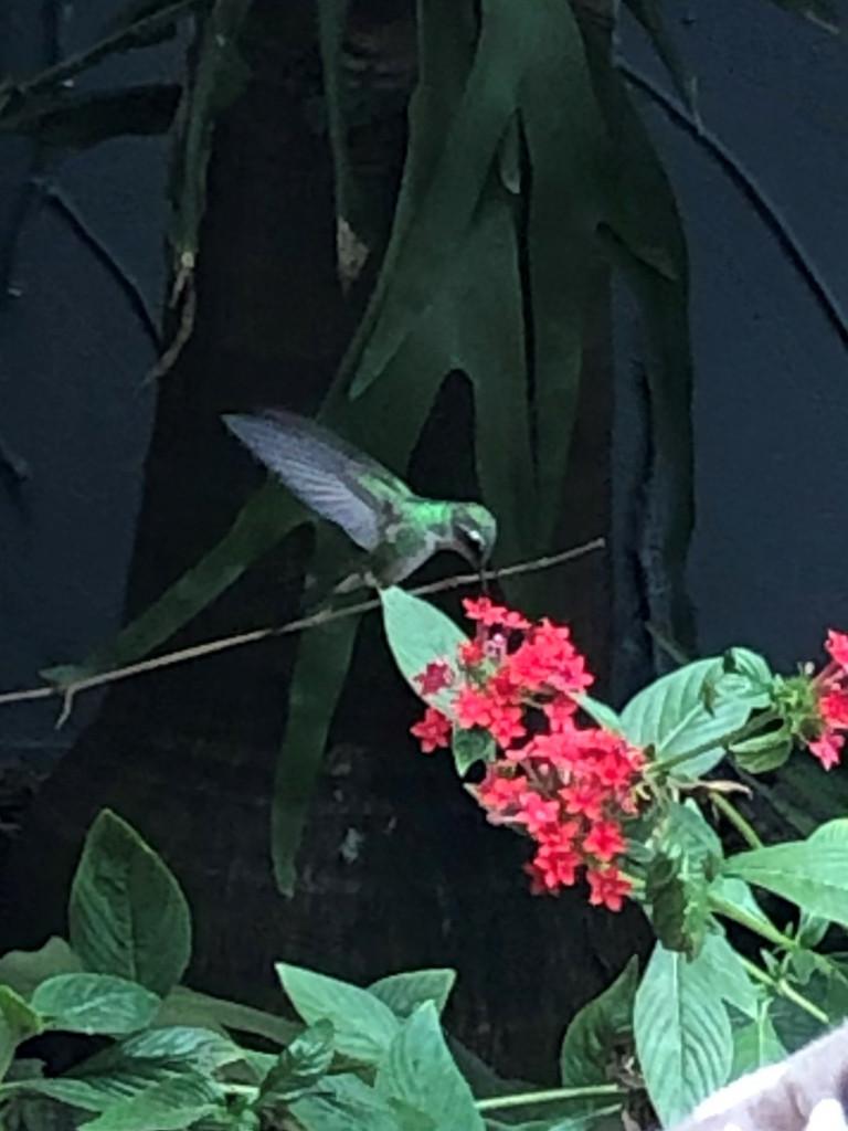 Mein Bild der Woche - Kolibri auf Kuba
