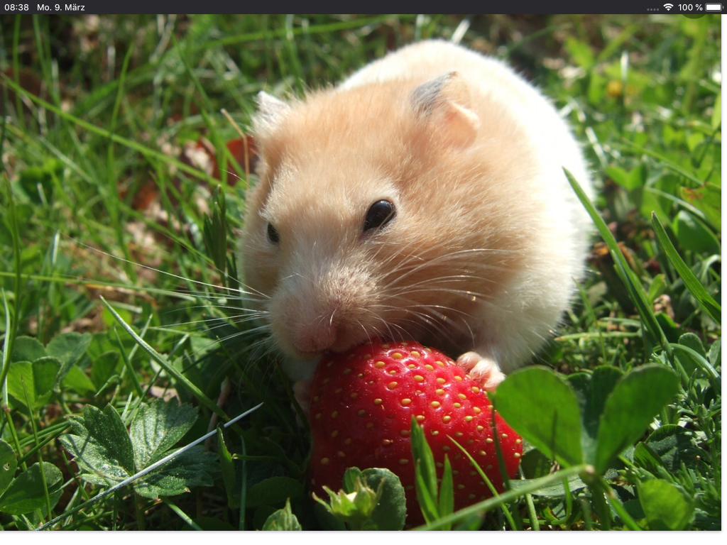 Mein Bild der Woche 11 - ein Hamster