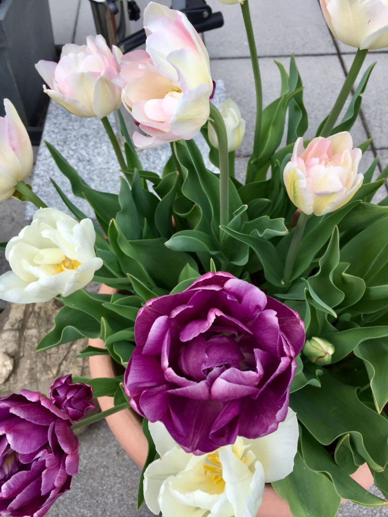 Super Summerfeeling im April - eleganter Traum