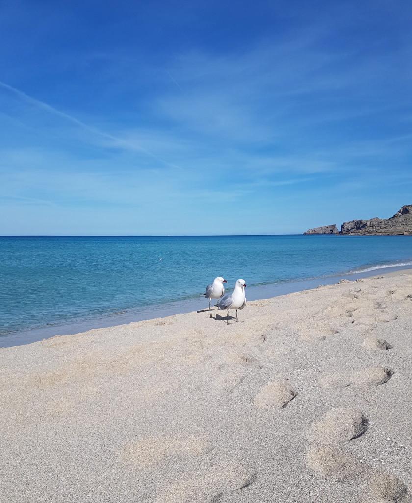 Leben als Deutsche auf Mallorca: Interview mit dem Ehepaar König - Cala Mesquida