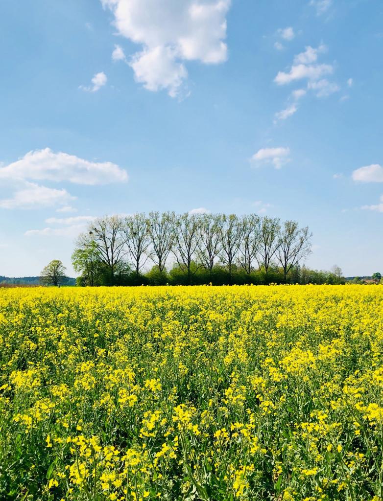 Die Welt in Gelb - Wandern daheim