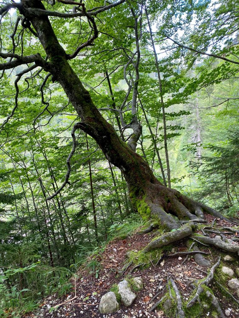 Wildbad Kreuth und die wilde Wolfsschlucht - Natur pur
