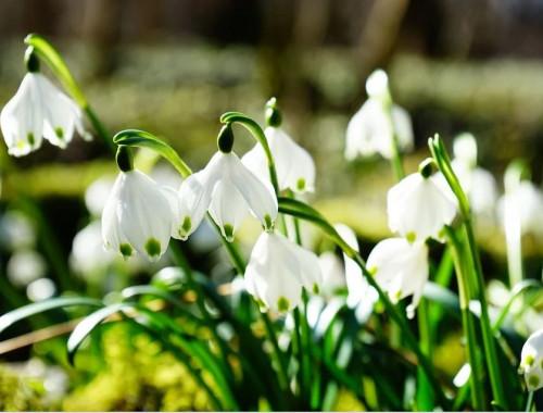Endlich Frühling - 8 Gründe, warum es Zeit wird