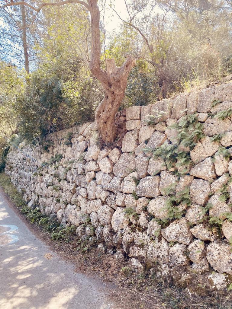 Mallorca und die Trockensteinbauten - Mauer an der Ruta de Pedra en Sec