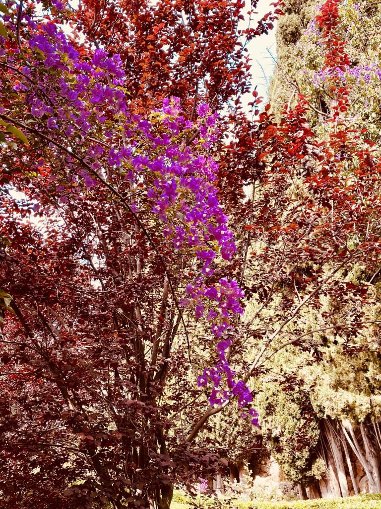Jardines de Alfabia Mallorca - Super in der Sommerhitze 10