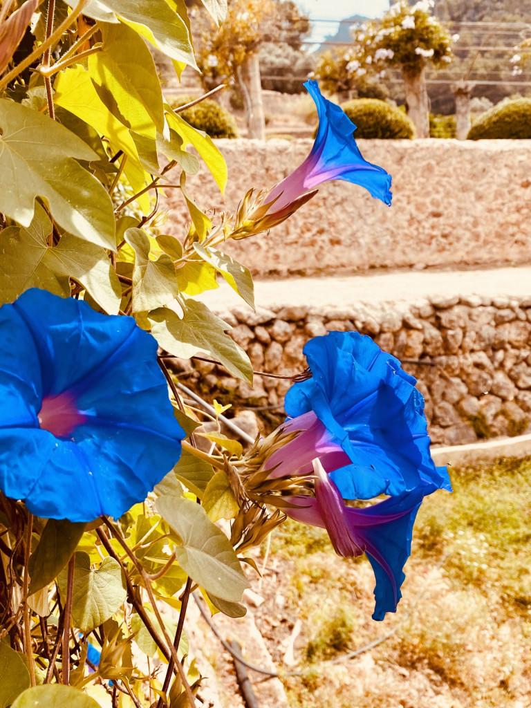 Jardines de Alfabia Mallorca - Super in der Sommerhitze 11
