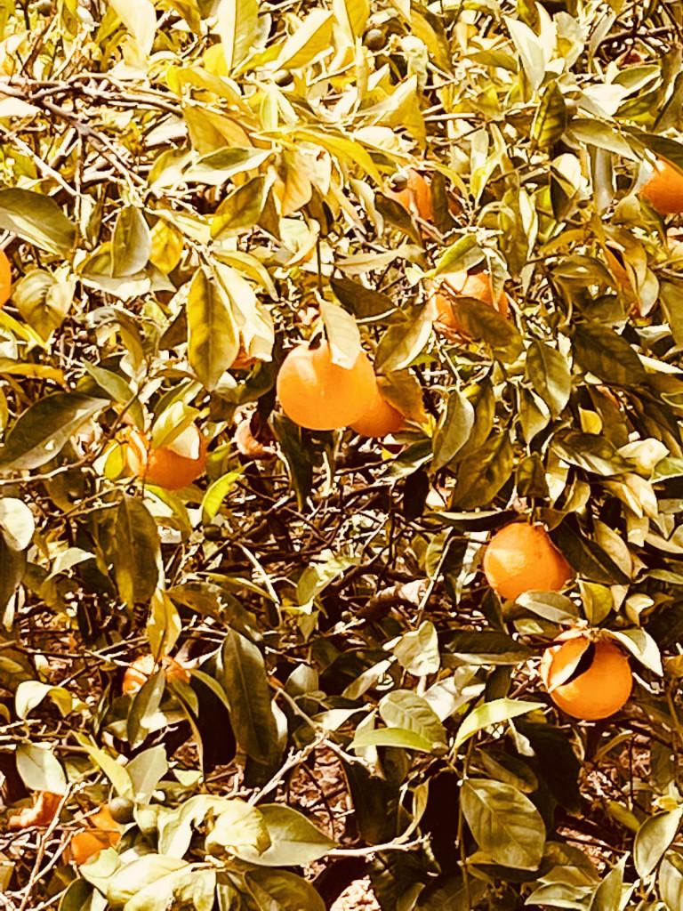 Jardines de Alfabia Mallorca - Super in der Sommerhitze 13