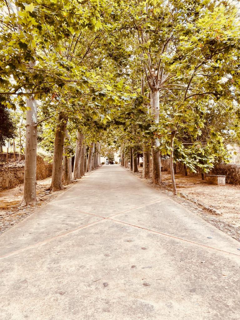 Eine Platanenallee führt vom Parkplatz hin zu den Jardines de Alfabia
